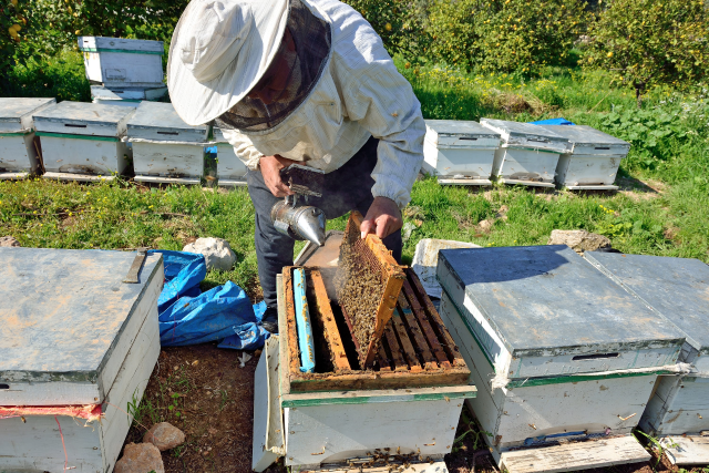 disability insurance for beekeepers